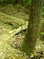 苔の生えた樫